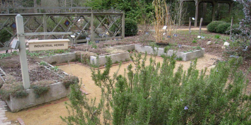 North Carolina Botanical Garden – A Marvel of Nature